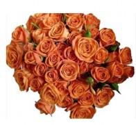 BABE Роза оранжевая