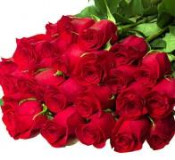 FREEDOM Роза красная