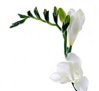 AMBIANCE white