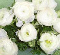 RAN ELEGANCE WHITE Роза белая