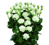 SNOWFLAKE Роза белая