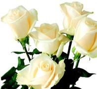 VENDELA Роза белая