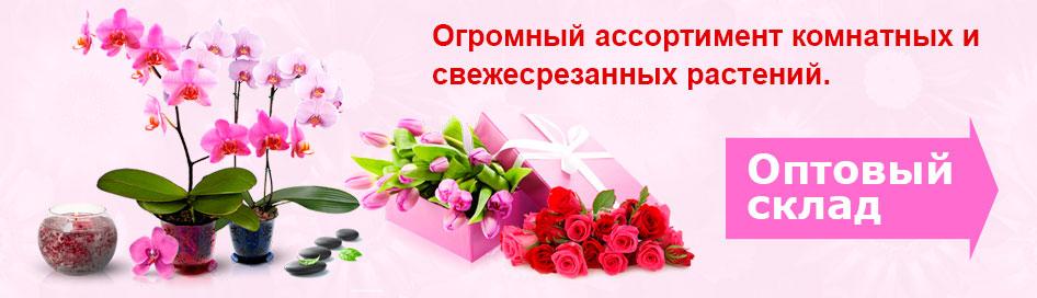 Цветы оптом и в розницу со склада в Минске